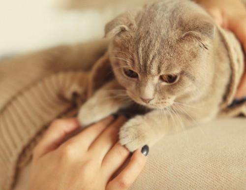 飼い主の手に手を乗せる猫