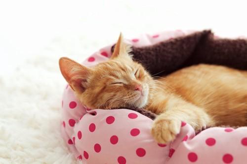 水玉の猫ベッドで寝ている猫
