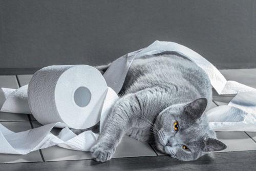 トイレットペーパーに絡まれた猫