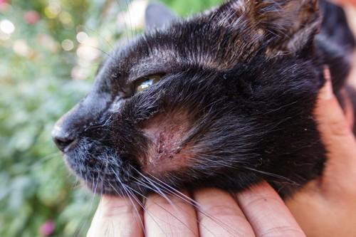 顔にかさぶたができた猫