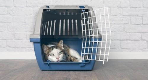 キャリーに入ってくつろぐ猫