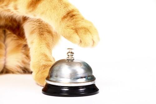 ひとり呼び鈴を鳴らす猫