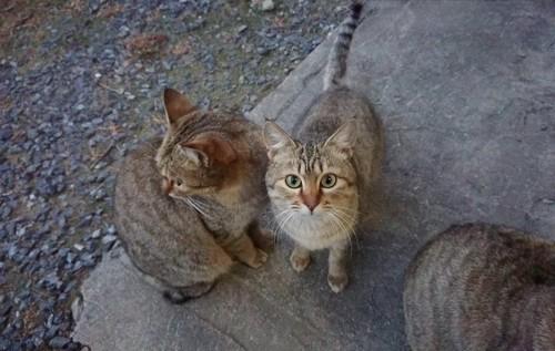 トラ猫が二匹いる写真
