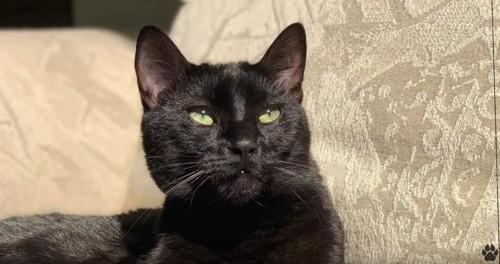 日向でリラックスしている黒猫