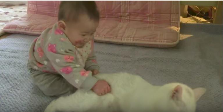また赤ちゃんに捕まる猫