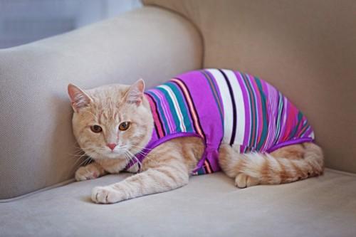 術後服の猫