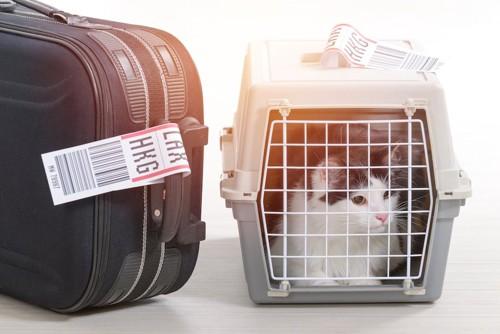飛行機に乗るキャリーバッグに入った猫