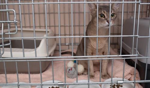 一段のケージの中でくつろぐ猫