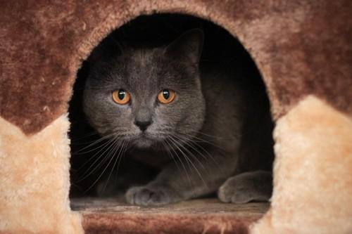 ドームに隠れるグレー猫