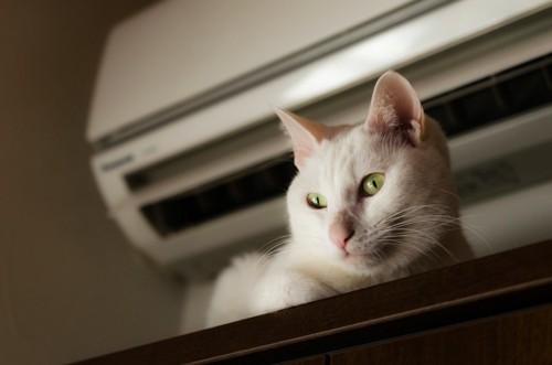 エアコンの通風口の前の猫