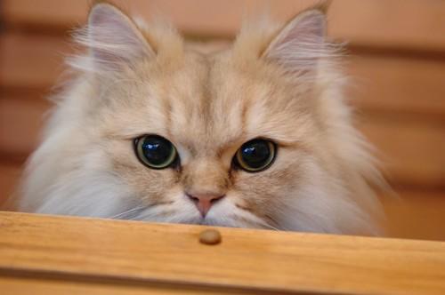 テーブルの上に置かれたおやつと大きな瞳の猫
