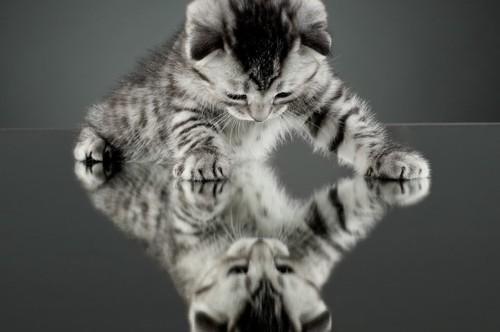 鏡を見る猫