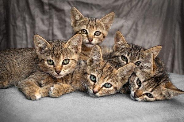 こたつの中に5匹の猫