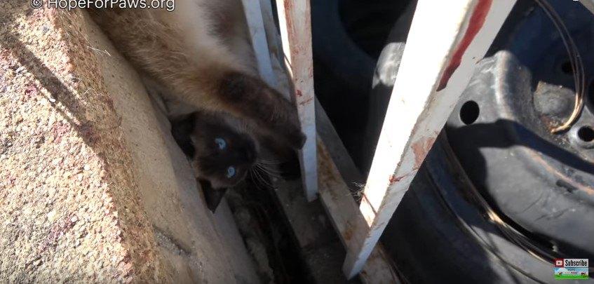 逆さ吊りの猫