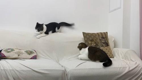 ソファーの上にいる2匹の猫