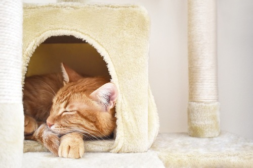 キャットタワーのハウスで寝る猫