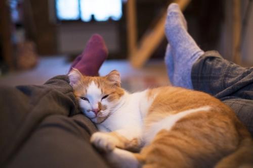 二人の足の間に眠る猫