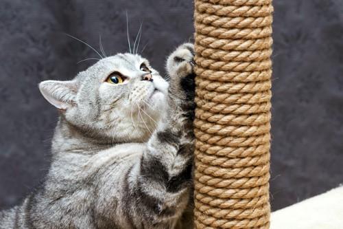 麻紐が巻かれたポールで爪をとぐ猫