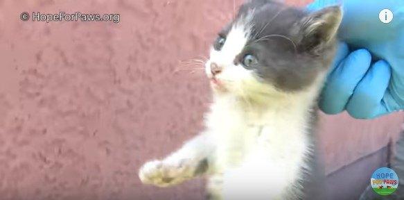 首をつままれて持ち上げられる子猫
