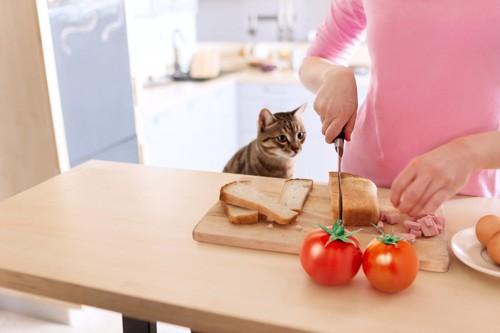 パンを見つめる猫