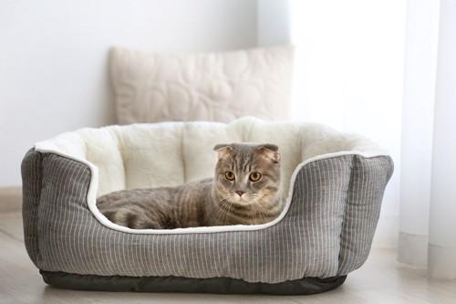 猫用クッションでくつろぐ猫