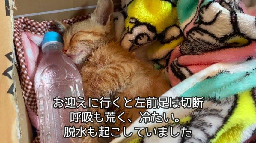 瀕死の子猫