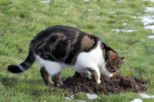 地面に穴を掘っている猫