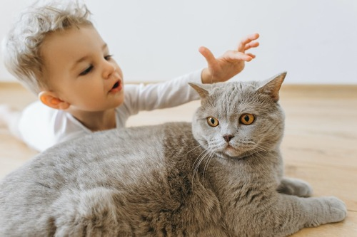 猫を触ろうとする赤ちゃん