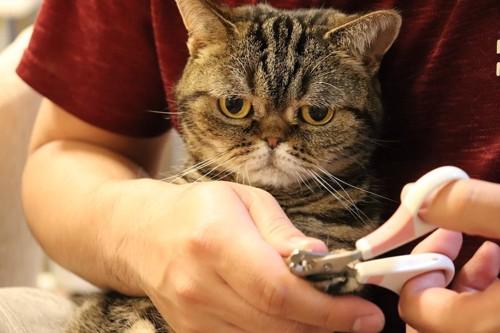 飼い主に爪切りをされている猫