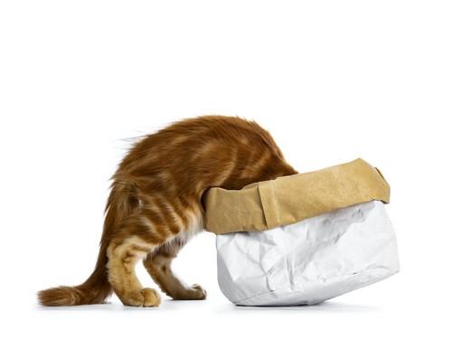 紙袋で作った箱に顔を突っ込む猫