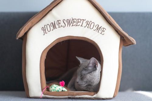 Home Sweet Home のハウスで寝る灰色猫