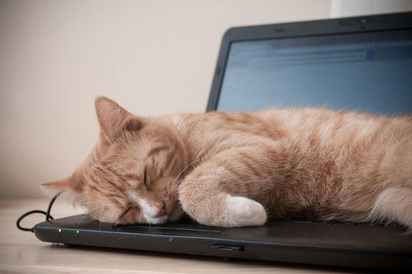 パソコンの上で寝る猫