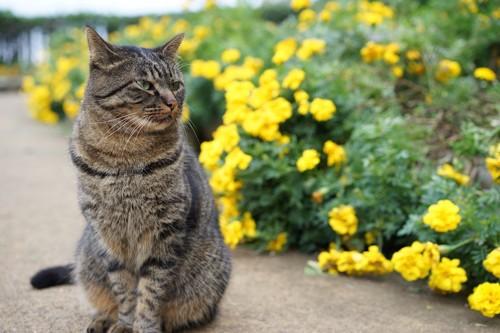 花の横に座るキジトラ猫