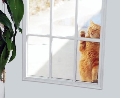 ドアを開けてほしくて鳴く猫