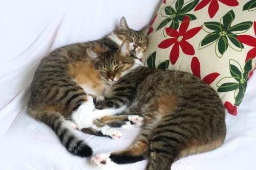 寝ている2匹の猫