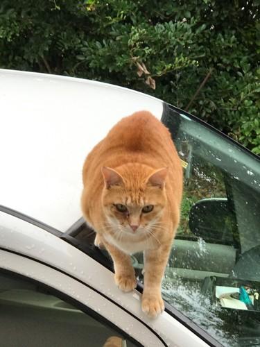 鋭い目つきの猫ちゃん