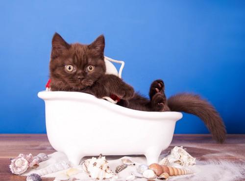 小さなお風呂に入る猫