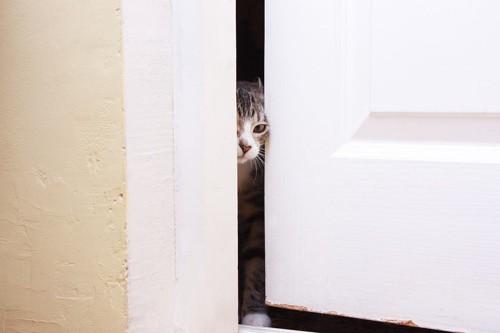 ドアの隙間から顔を出して様子をうかがう猫
