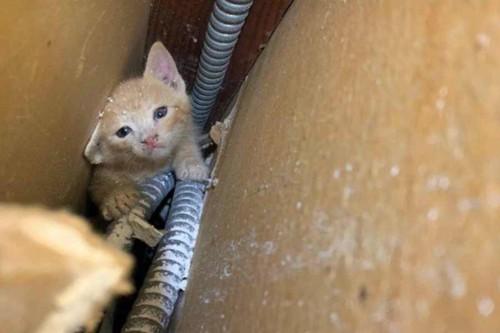 壁裏に発見された子猫