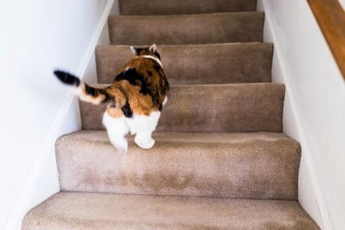 階段を逃げる猫
