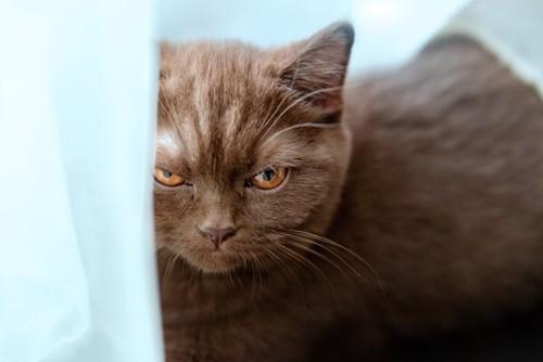 ご機嫌斜めな猫