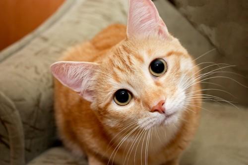 ジッとこちらを見つめる猫