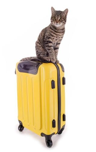スーツケースに乗っている猫