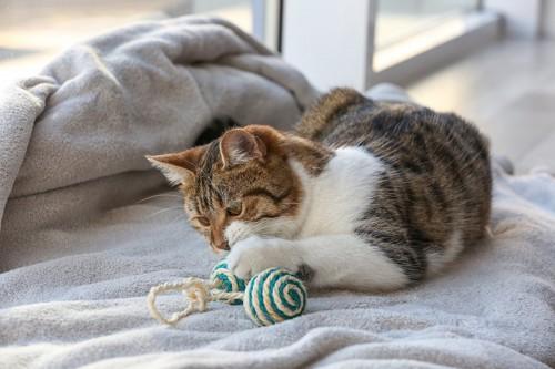 慣れたおもちゃで遊んでいる猫