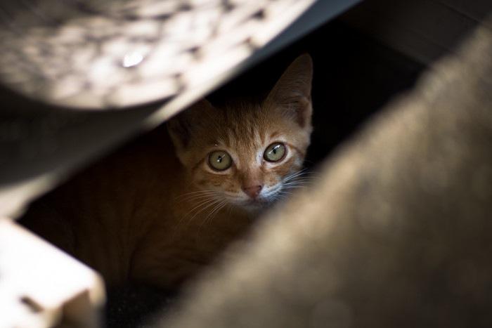 隙間からのぞく子猫