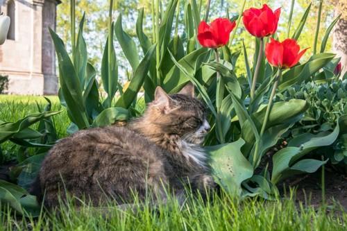 庭でまどろむ猫