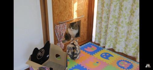 網越しに見つめ合う猫