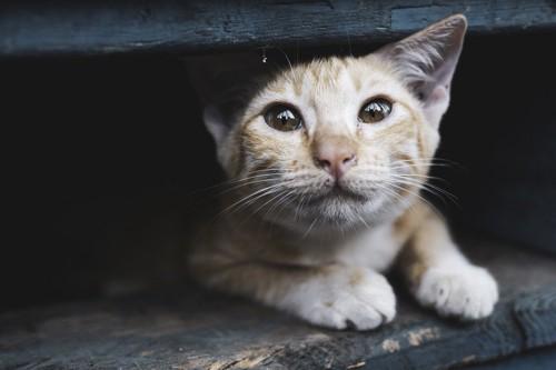 縁の下の猫