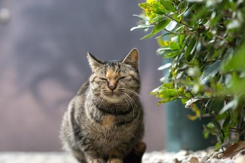 目を細めてこちらを見る野良猫