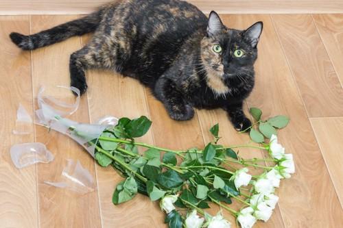 花瓶を倒して割ってしまった猫